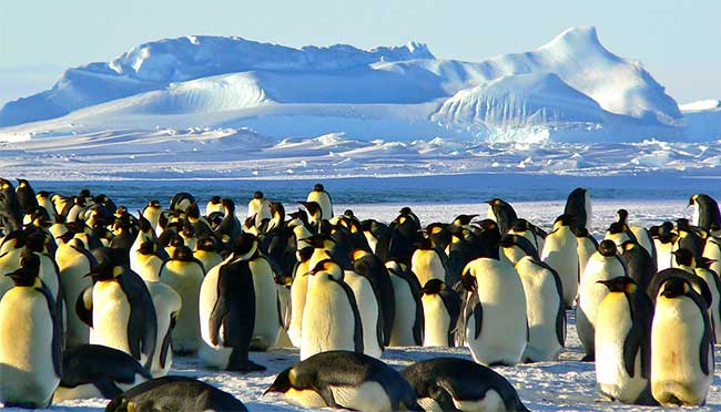 polar expedition cruise - penguins
